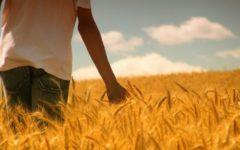 Estudo Biblico – O Deus da provisão que nos Sustenta